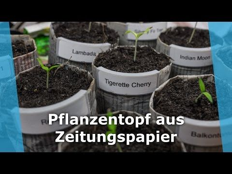 Up-cycle News Paper to Plant Pot to Grow Tomato - All