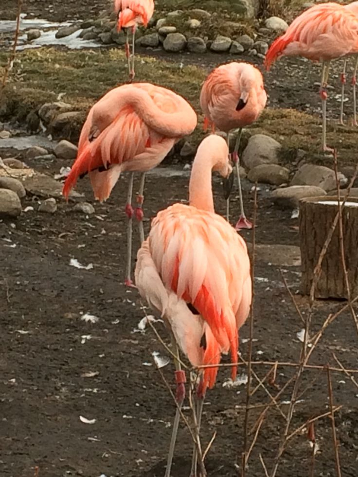 Flamingo zoo time