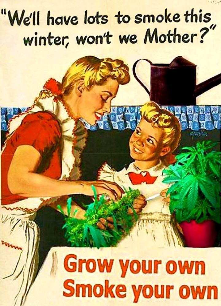 307 best weed humor images on pinterest a great ebook that has interesting recipes for dragon mints and cannabis chocolates marijuana guide to buying growing harvesting and making medical fandeluxe Epub