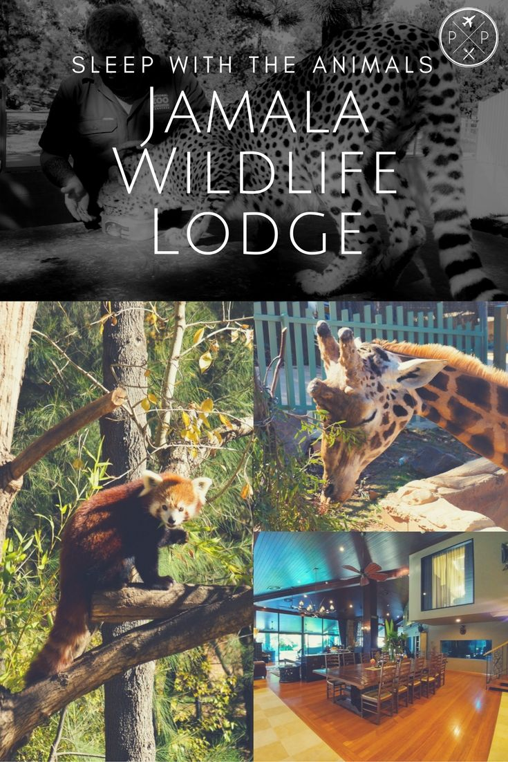 Jamala Wildlife Lodge in the National Zoo & Aquarium, Canberra, is a chance to get up close and personal with some of the zoo's inhabitants.