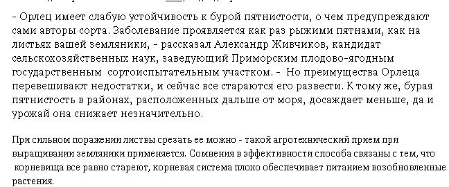 Почему покупатели земляники в Приморье предпочитают Орлец? | ОБЩЕСТВО | АиФ Владивосток