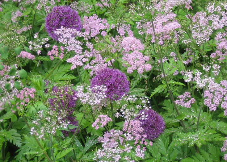1191 Best Images About Companion Planting On Pinterest 400 x 300