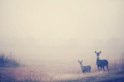 fog. deer. fabulous.