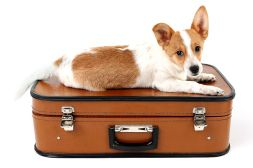 """One of our many goals is to make your four-legged friend's boarding check-in process as smooth as possible. When you drop off your pup for Overnight Camp, we go through what we call an """"Express Check-In"""" with you. On this form, we can find all of the information we will need while your dog is with us."""