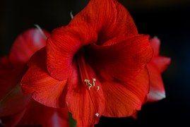Orquídea, Vermelho, Planta De Interior