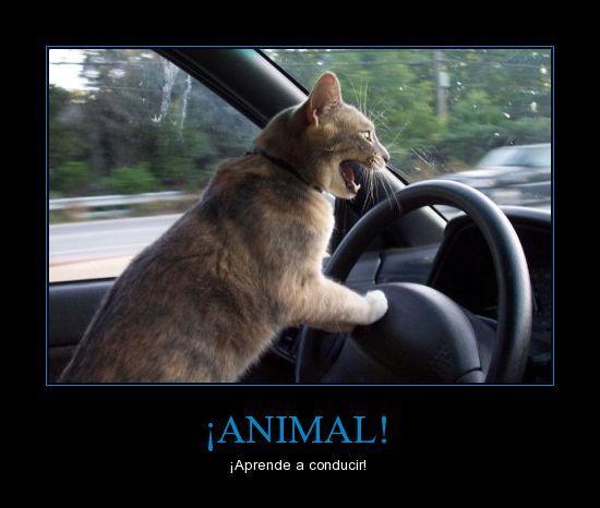 ¡Aprende a conducir! Esta es yo cuando conduzco! Mas personas no saben como se conduce.
