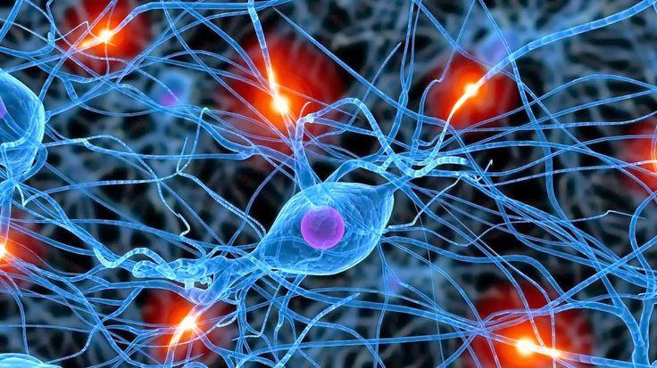 estudio con un raton para observar la reparacion neuronal de celulas madre tranplantadas. Para su observacion se utilizo la tecnica con microscopia de fluorescecncia de lamina de luz (LSFM), combinado con resonancia magnetica tridimensional de alta precision (3D MRI)