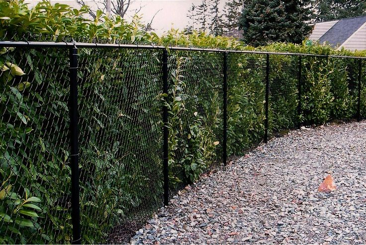 Outdoor Building , Outdoor Chain Link Fences : Backyard With Gravels And Chain…