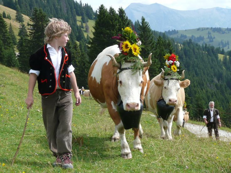 Cows on parade! Loving the summer months in Gstaad. Thank you Gstaad Saanenland Tourismus for the pictures. #gstaad #switzerland #summer #alpinesummer #cows #parade #leolovesgstaad