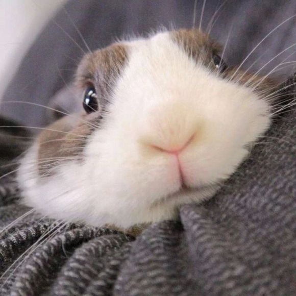 This rabbit looks like he just remembered something major.