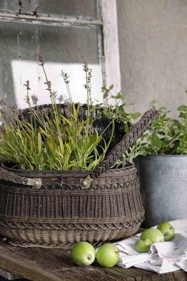 Potted lavender in a vintage basket - Modern Country: Dekorative epler ~ decorative apples ..