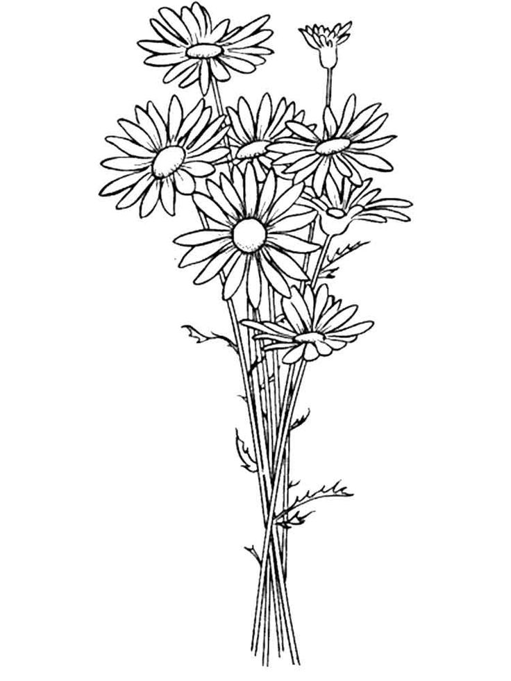 Daisy Flower coloring pages. Download and print Daisy