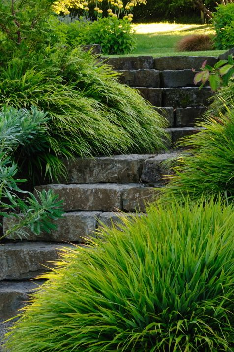 54 best images about ornamental grasses on pinterest for Natural grasses for landscaping