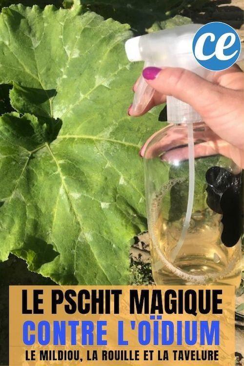 Le Pschit Magique Contre Le Mildiou Et l'Oïdium Sur Les Plantes.