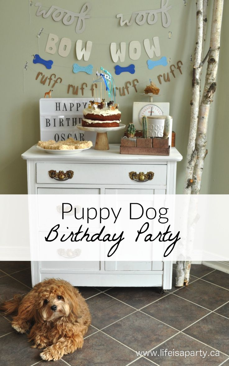 Puppy Dog Birthday Party: easy ideas for a dog cake for humans, and a real dog, along with inexpensive dog themed decorations, and dessert table.
