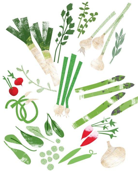 Hortalizas #verdura #ilustración