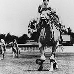 Camel racing at Eagle Farm Racecourse Lancaster Road Ascot Brisbane by State Library of Queensland, Australia