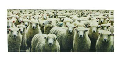 Sheeps™ Art Block  Artearoa | Shop New Zealand NZ$ 51.90