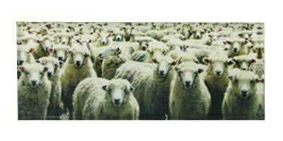 Sheeps™ Art Block  Artearoa | Shop New Zealand