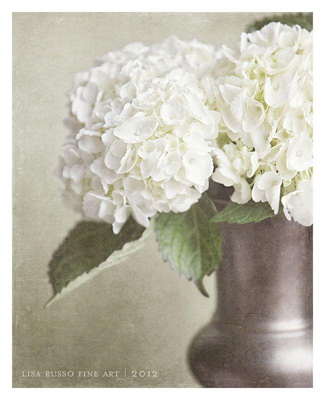 flower picture, white hydrangea art, shabby chic home decor