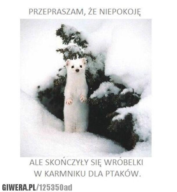 Giwera.pl