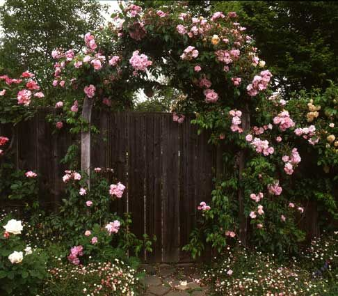 This would be the entrance to my little cottage garden : )