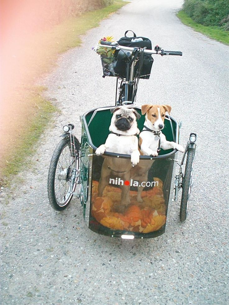 Take your pets along for the ride on this Nihola Cargo Trike.