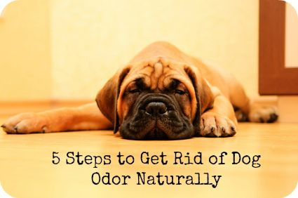 How to Get Rid of Dog Odor Naturally #doglove #green