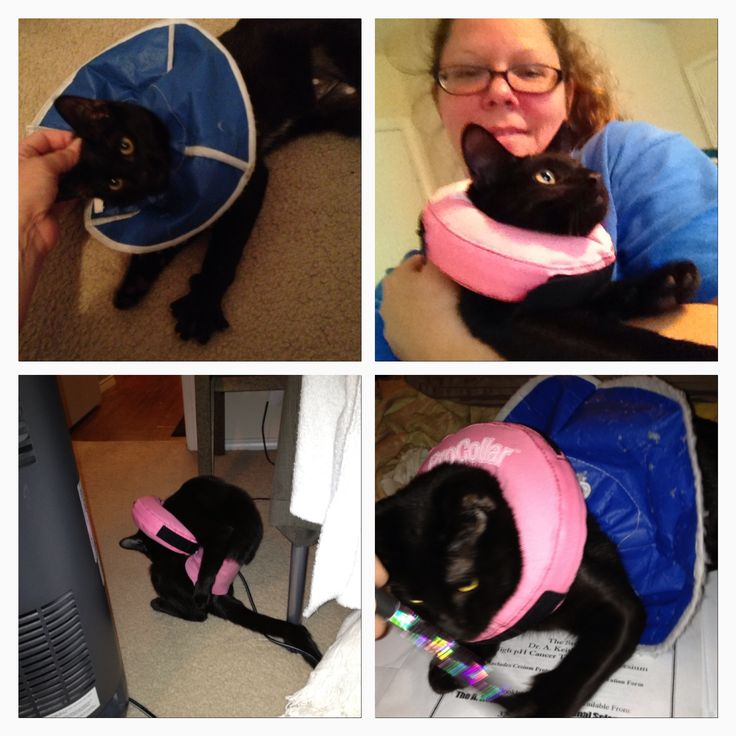 Miss Kitty 11 days post surgery. 882014. After being