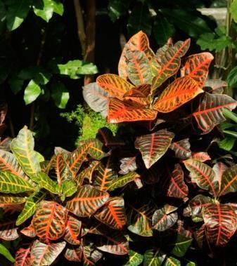 Crotons Existint