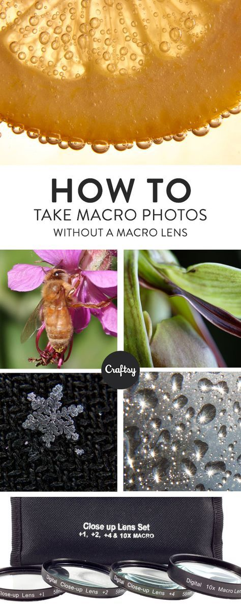These top tips will teach you how to take incredible macro photos without having to buy a macro lens! http://amzn.to/2sBK376