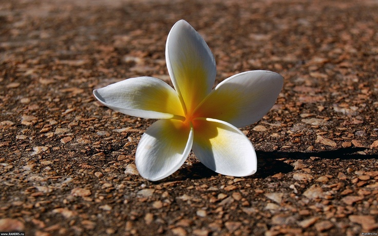 Flower on path