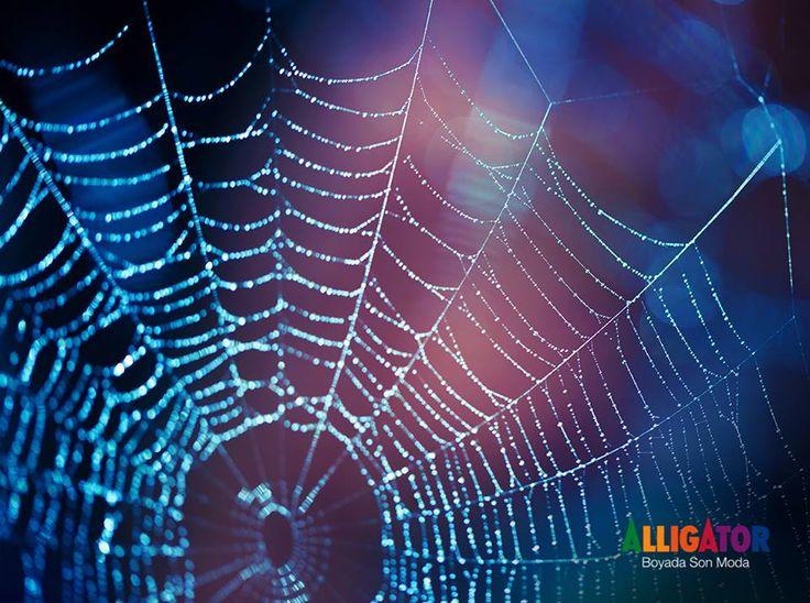 Örümcek ağlarının sağlamlığı ve esnekliğinden ilham alınarak tasarlanan terminaller, hayvanat bahçeleri ve stadyumlar, doğanın mimari gücünü kanıtlar nitelikte.