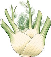 What is fennel? Growing and cooking with fennel, fennel recipes, substitutes. Health benefits of fennel.