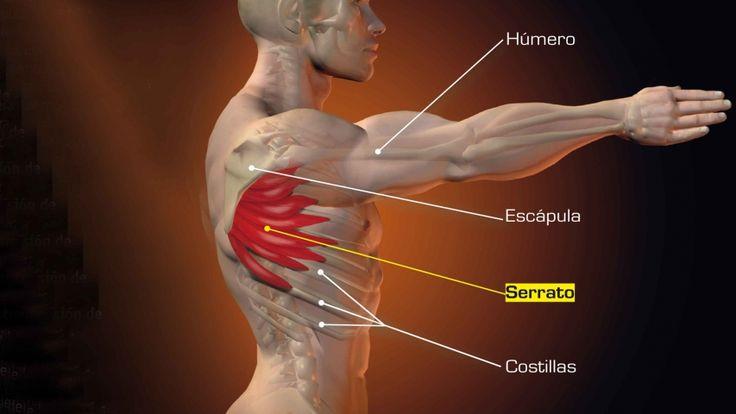 Mejora tu postura | Estabilizador de la escápula | Mecano Humano | Sportlife.es