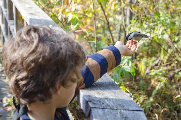 Ibirapuera fará Caminhada de Observação de Pássaros para crianças