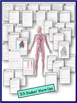 Human Body Interactive Notebooks, Warm Ups: Circulatory System.