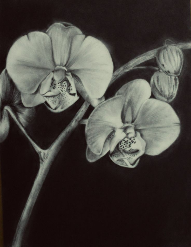 Orchids #drawing #pencil | drawing flowers | Pinterest