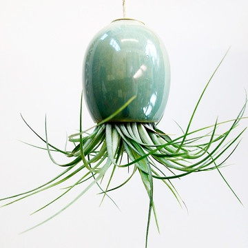 Air Plant Pod Small Blue Green Now Featured On Fab. Http://fab