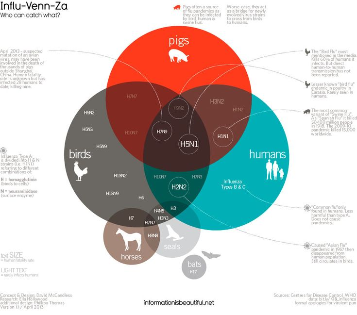 Influ-Venn-Za: Who Can Catch what by David McCandless, informationisbeautiful #Influenza #Infographic