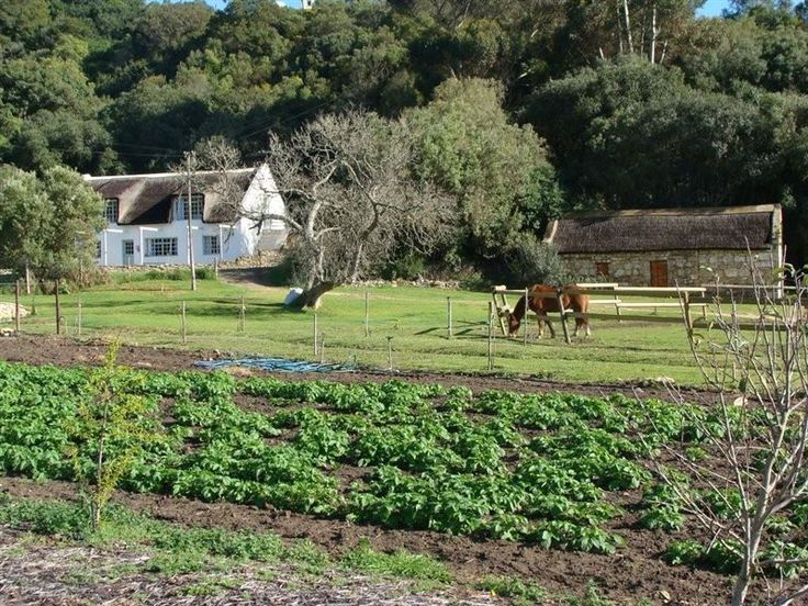 Rustfontein Guest Farm - Rustfontein is a guest farm nestled on the banks of the Goukou River Estuary, a mere 14 km scenic meander from Stilbaai. This old farmhouse has been renovated for easy country living with a rustic-luxury ... #weekendgetaways #stilbaai #southafrica