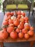 about curing and storing pumpkins (squash)