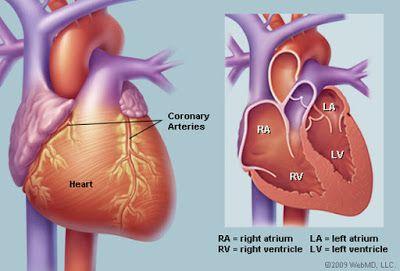 MEDICINE: Congenital Heart Disease part 10