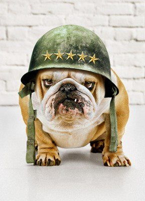 Dont' mess with a Devil Dog