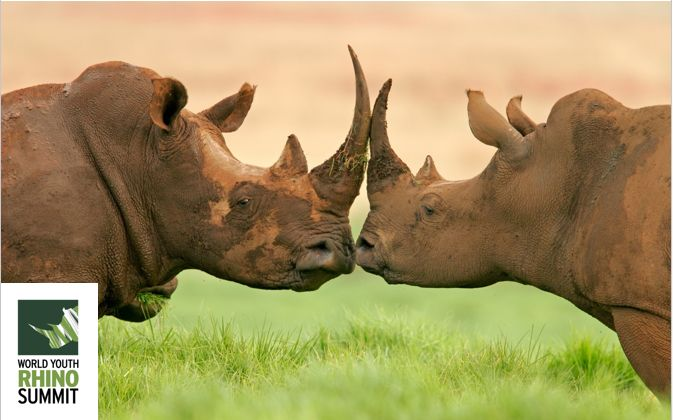 Keep them horny!! #RhinoSummit2014 One our favourite pictures... #wildlife #nature #rhino