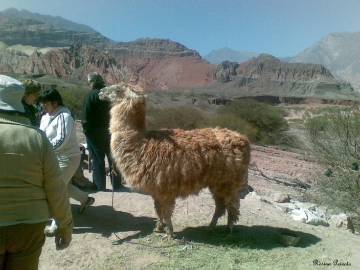 32 Best Llama Love Images On Pinterest