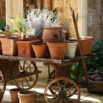 Container gardening tips -- Canadian Living