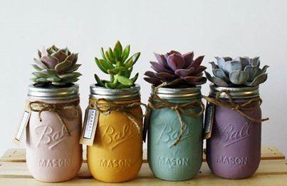 succulents flower pot