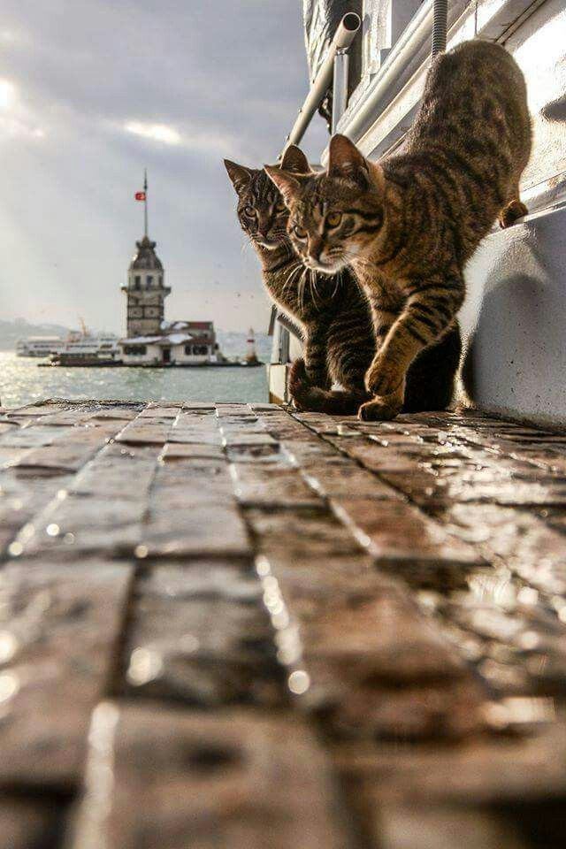 Istanbul'sCats.... Have to get down on the low to get a shot like this....