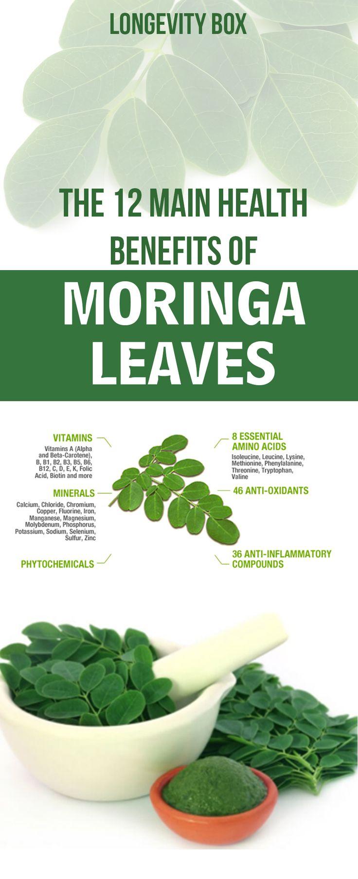 The 12 Main Health Benefits Of Moringa Leaves